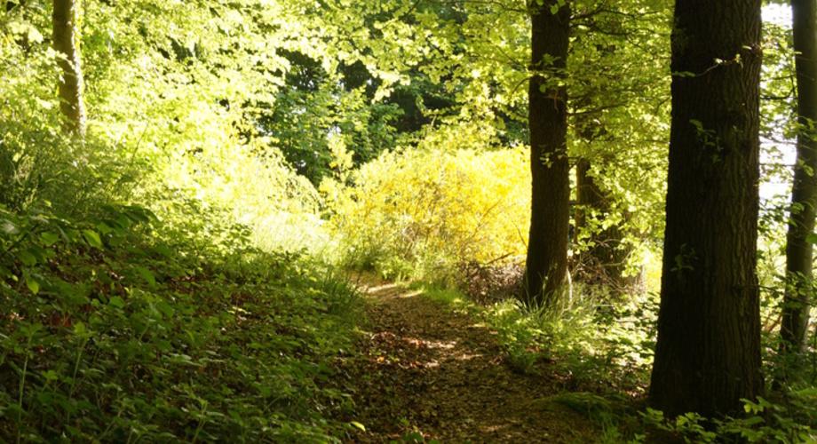 Psychotherapie, Hypnose und Paartherapie in Engelskirchen